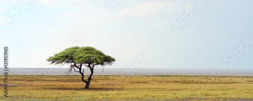 Fotobehang Wit african landscape