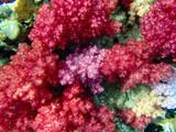 Underwater world, underwater coral and fish shoal