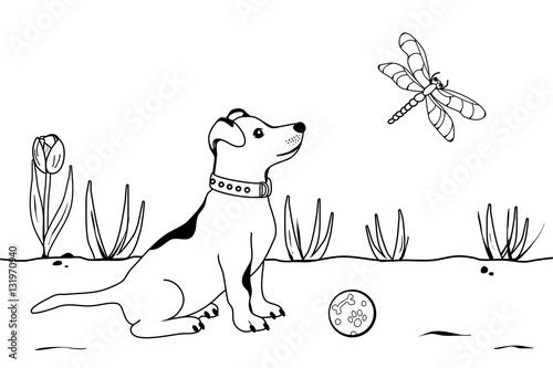 Gamesageddon Der Hund Beobachtet Eine Libelle Lizenzfreie Fotos