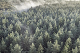 Panoramic view of misty forest in retro, vintage style.
