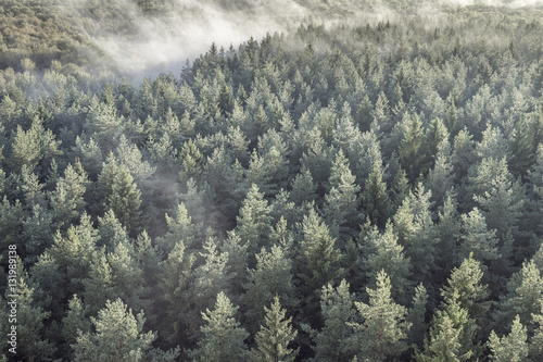 Panoramic view of misty forest in retro, vintage style. - 131989138