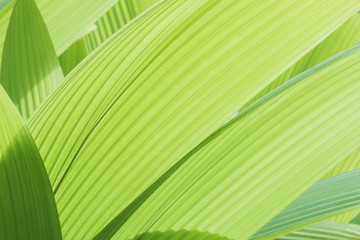 greenery background abstract palm leaf