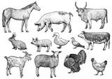 Farm animals illustration, engraving set, vector - 132038314