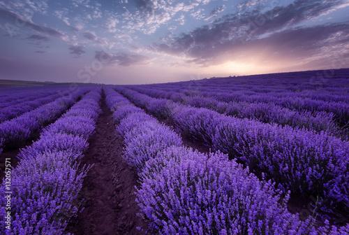 Lavender fields. Beautiful image of lavender field. Summer sunrise landscape, contrasting colors. Beautiful clouds, dramatic sky. © djevelekova