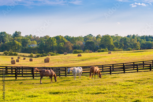 Horses at horse farm. Country summer landscape