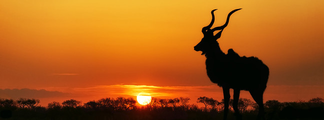 South Africa Sunset Kudu Silhouette © adogslifephoto