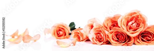 header mit rosen vor weiß
