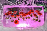 Red poppies and butterflies frozen into ice