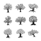 Fototapety magnificent olive and oak trees silhouette