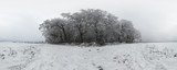 Beautiful winter forest 360 degrees panorama
