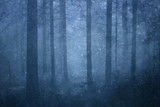 Lovely snowfall in the foggy blue colored conifer forest landscape.