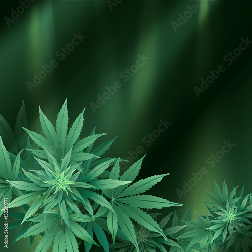 Cannabis or Marijuana Background. Hand drawn vector illustration of the plant in top view and spotlights.