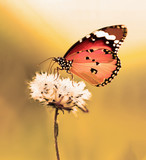 Nature spring flower with butterfly