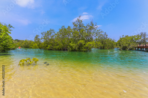 Mangrove forest between Freshwater, saltwater.
