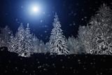 White snowy shroud. Spruce forest in winter. Winter landscape