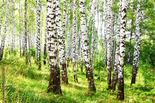 summer in sunny birch forest - 132260788