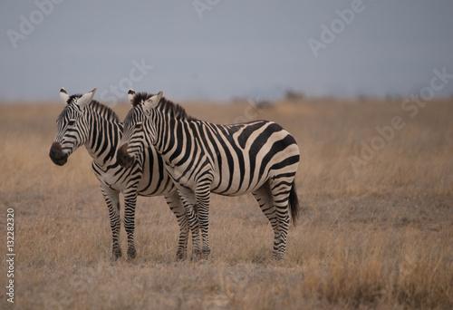 Poster Safari Kenya