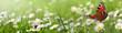 Quadro Blumen 961