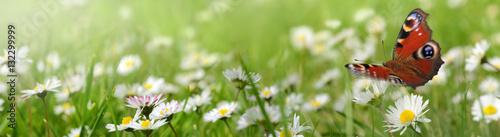 Fotobehang Pistache Blumen 961