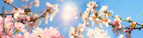 Foto op Aluminium Lichtroze Glückwunsch, alles Liebe: Mandelblüten vor blauem Frühlingshimmel :)