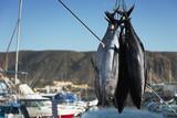 Fishing boat unloading tuna at harbor pier