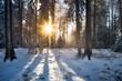Sonnenuntergang im Wald im Winter