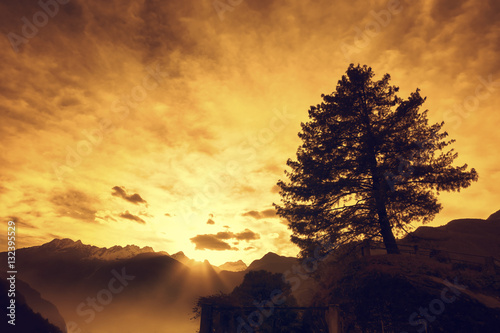 high mountain sunset with tree silhouette