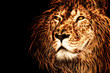 lion head illustration background