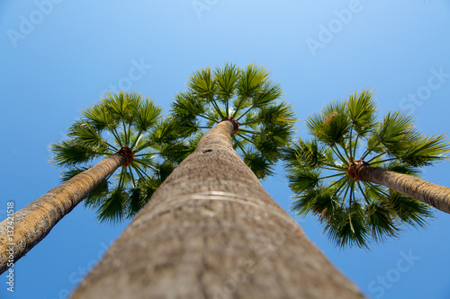 Poster Green palm trees with blue sky background
