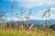 Colorado grasses