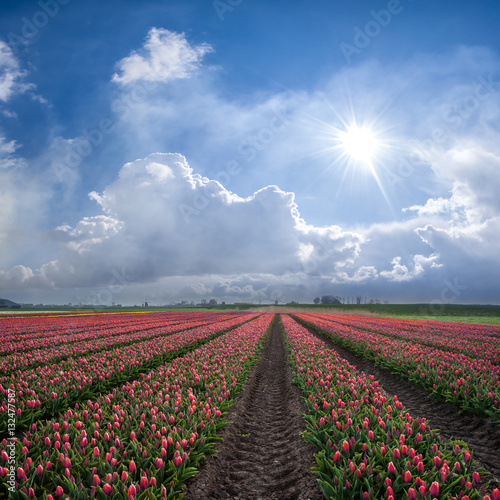 Spring Landscape with Red Tulips Poster