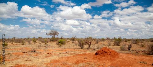 Papiers peints Orange eclat Scenery of Kenya, on safari through the savannah
