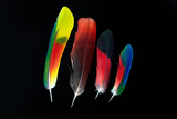 Four colorful parrot bird feathers on black