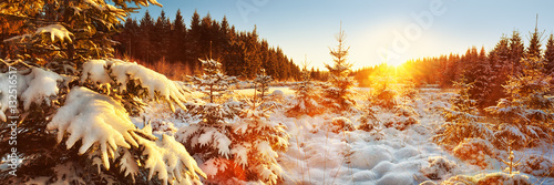 Papiers peints Jaune de seuffre Winter Forest Landscape Panorama, Germany