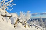 verschneite Winterlandschaft Sonne Winterwald