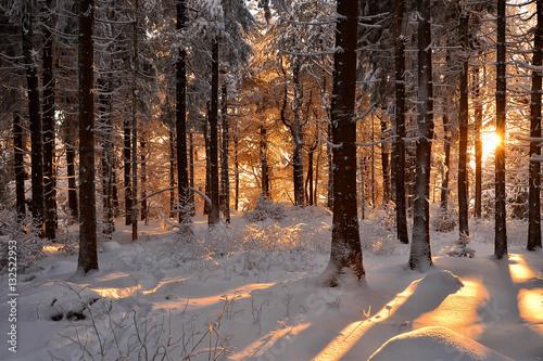 Fotobehang Betoverde Bos verschneite Winterlandschaft Sonne Winterwald