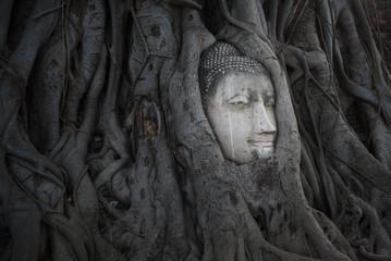 Buddha Head in Tree Roots, Wat Mahathat © Natapol