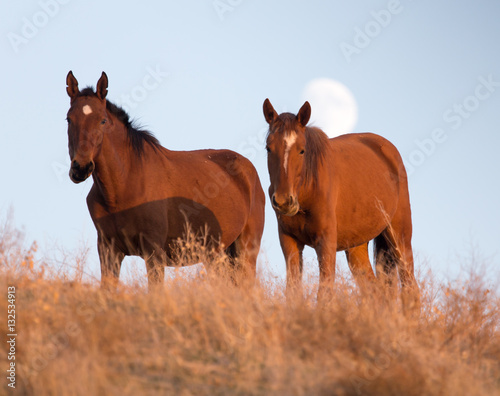 a horse in a pasture at sunset