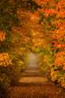 Fall Farm Lane