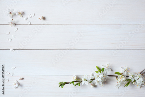 Fototapeta Background with flowering, blooming branches of plums, cherries