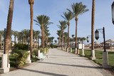 An oasis of palm trees and greenery photo. Embankment along the beach in Makadi, Egypt - 132546776
