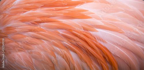 Flamingo feather pink background