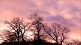 Magestic clouds move gracefully over barren trees during a winter sunset