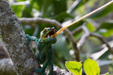 Eating chameleon in Andasibe, Madagascar