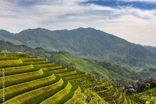 Poster View of the Longsheng Rice Terraces (Dragon's Backbone Rice Terraces) in Guangxi, China