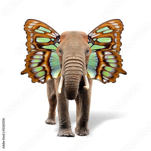 Poster Elephant with butterfly wings