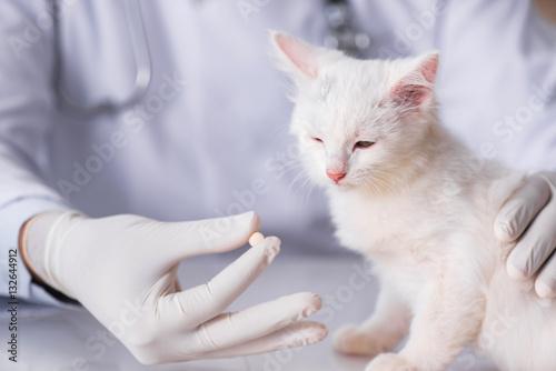 Poster White kitten visiting vet for check up
