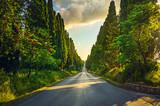 Bolgheri cypresses tree straight boulevard. Tuscany Italy