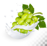 Green grape in a milk splash on a transparent background. Vector