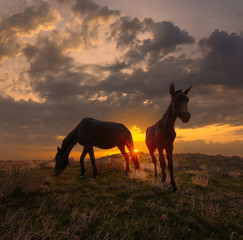 Beautiful sunrise landscape with horses. Horse and foal on mountain pasture under dramatic